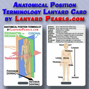 Anatomical-Position-Terminology-Lanyard-Badge-Card-PVC-Waterproof