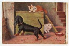 SPERLICH . Chats . Cats . Gato . Katze . TECKEL . DACHSHUND . Dog . Chien