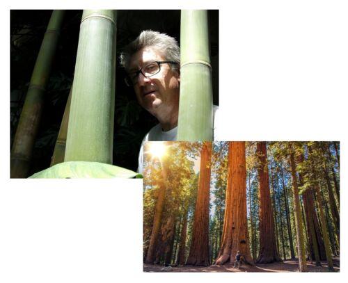 Zwei verrückt winterhart dazu Mammutbaum riesige Pflanzenarten Riesenbambus