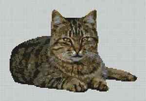 Tabby-Cat-Kitten-Counted-Cross-Stitch-Kit-11-5-034-x-8-034-29cm-x-20cm-C2263