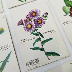 Vintage-Coca-Cola-Coke-Trade-Cards-11-Wild-Flowers-Of-America-With-Envelope-USA