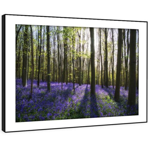 SC708 Purple Flower Forest Sunrise Landscape Framed Wall Art Large Picture Print