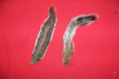 Real SQUIRREL TAIL Fly Fishing Flies Dog Training