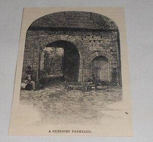 Pequeno-1885-Revista-Grabado-un-Guernsey-Granja-GB
