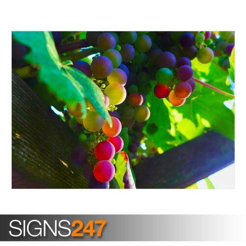 Photo Picture Poster Print Art A0 A1 A2 A3 A4 AE616 GRAPES
