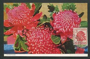 Australia Mk 1959 Flora Warath Bush Maximum Carte Carte Maximum Card Mc Cm D7082-afficher Le Titre D'origine