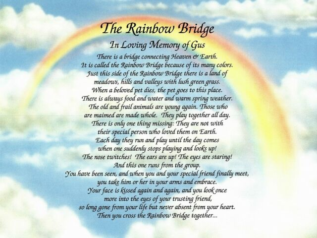 Exceptional image in rainbow bridge poem for dogs printable