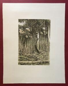 Herbert-cacciatore-foresta-farblithographie-1978-a-mano-firmata-e-datata