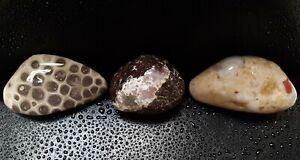 3-Michigan-Fossil-Sampler-Hexagonaria-Petoskey-Stone-Pudding-Stone-Prehnite-ROCK
