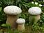 Naturstein Steinfigur Gartenpilz Pilze aus Naturstein  Set 3St