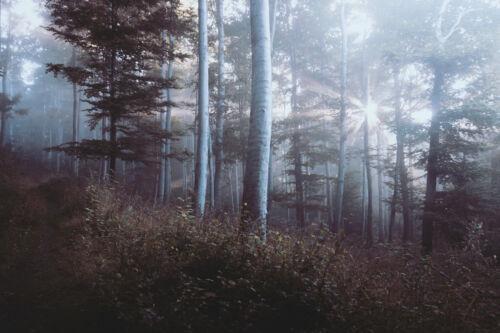 MISTY FOREST FOG LANDSCAPE POSTER PRINT STYLE F 24x36 HI RES 9MIL PAPER
