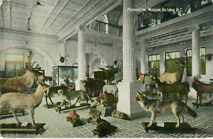 Postcard-Provincial-Museum-Victoria-BC-Canada-Animals-Taxidermy
