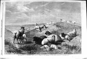Original-Old-Antique-Print-1862-Shepherd-Sheep-Dog-Countryside-Farming-Nature