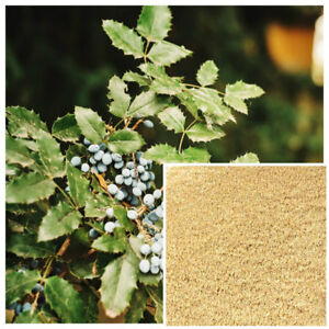 Details about Oregon Grape Root powder, organic, soap making supplies,  herbal extracts