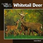 Whitetail Deer by Laura Evert, John F. McGee (Paperback, 2000)