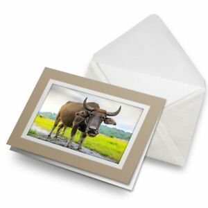 Greetings-Card-Biege-Carabao-Buffalo-Philippines-3169