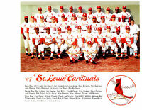 1967 St. Louis Cardinals 8x10 Team Photo World Series Champion Baseball