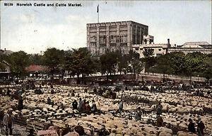 Norwich-England-Norfolk-AK-1907-Castle-Burg-Cattle-Market-Viehmarkt-Markt-Schafe