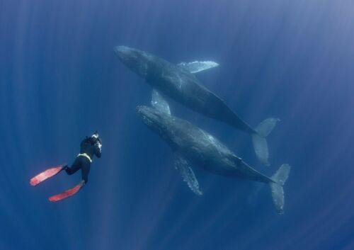 A1 Whale Watching Scuba Diving Poster Art Print 60 X 90cm 180gsm Fun Gift #16870
