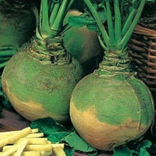 Swede 900 Seeds Vegetable Gowrie