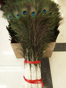 Wholesale 10-100pcs high Quality Natural peacock feathers 70-80cm//28-32inch