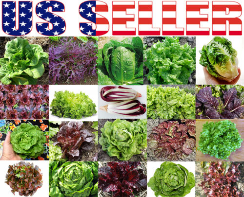 ORGANICALLY GROWN Lettuce Mix 20 Varieties Heirloom NON-GMO Rare For Salad 300