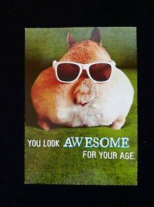 Funny Birthday Card -  Backward Pig Wearing Sunglasses As If Aging Ass Backwards