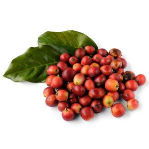 Am-HB-25Pcs-Coffee-Bean-Seeds-Easy-to-Grow-Organic-Plant-Home-Garden-Bonsai-De