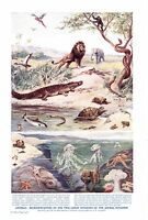 Animals; Two Great Divisions of the Animal Kingdom.  Scarce print circa 1940s