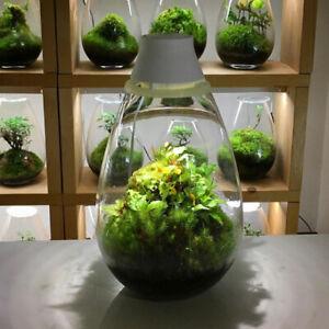 Japanese Moss Terrarium with LED lighting, Mosslight White Brand new