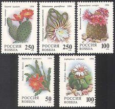 Russia 1994 Cactus/Cactus/fiori/piante grasse 5v n17805