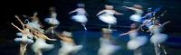 National Ballet of Canada - Paz de la Jolla & Dark Angels with Cacti