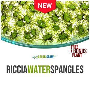 10-riccia-eau-paillettes-BONUS-gratuit-Plante-Live-plantes-flottantes-pour-aquarium