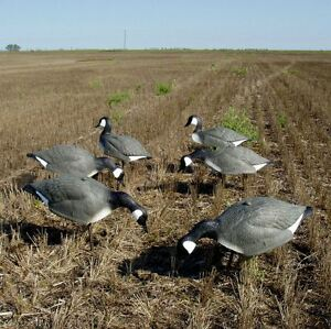 CARRY-LITE-ONE-PIECE-CANADA-CANADIAN-GOOSE-SHELL-DECOYS-WITH-STAKES-6-NEW