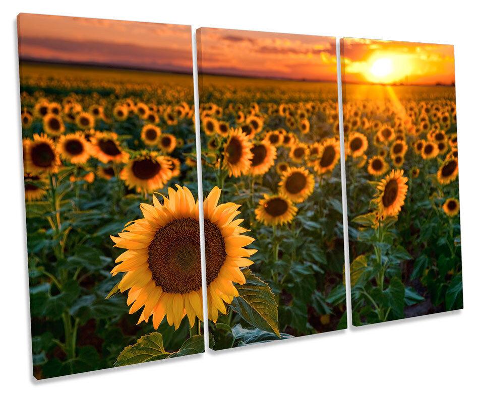 Sunflower Sunset Floral TREBLE CANVAS WALL ART Box Framed Framed Framed Picture 19027d
