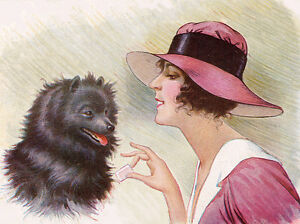 POMERANIAN SPITZ DOG GREETINGS NOTE CARD LOVELY DOGS PLAY WITH LITTLE GIRL