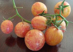 CRAZY-CHERRY-Tomate-10-Samen-neue-Ernte-selten-knackig-suess-Balkon-alte-Sorte