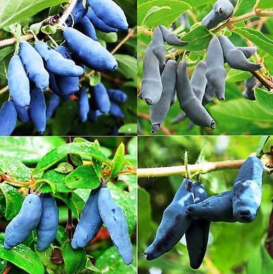 Leckere und essbare Früchte im Garten; jetzt im Sparset !