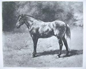 Discret Cheval Horse Impression Georges Petit Gravure D'après Une Oeuvre De Rosa Bonheur