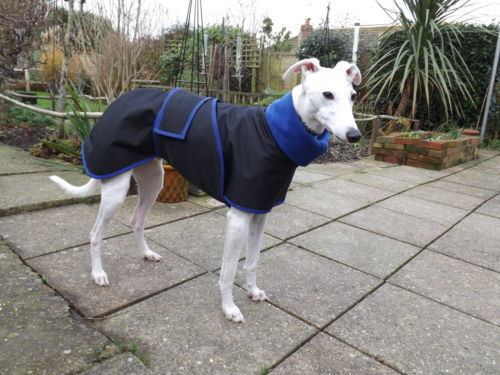Whippet Greyhound Lurcher walking out water proof coat ' 4 measurements needed'