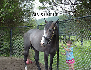 """Rockport Harbor Horse Racing 8/"""" by 10/"""" Photo Fox Hill Farm Stable #10"""