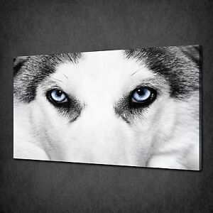 BLUE-EYES-OF-THE-WOLF-ANIMAL-MODERN-CANVAS-WALL-ART-PRINT-PICTURE-READY-TO-HANG