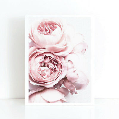 Peony Peonies Flower Art Print Poster Canvas Scandi Blush Pink and White (pcint)