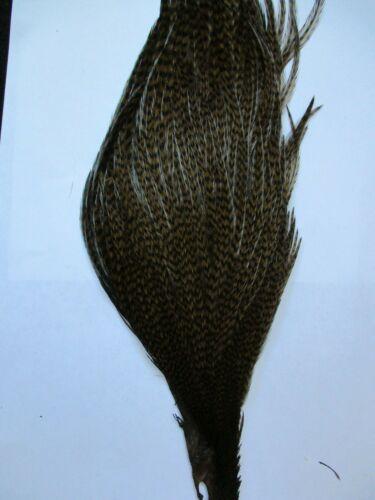 Premium Cock Hals Cape Grad 2 Dunkel Olive Grizzle Genetic Halb Dry Fly