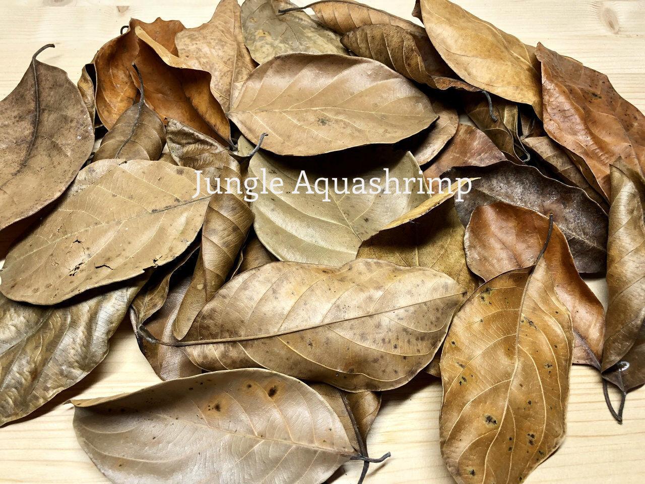 Dried Jackfruit Leaves BioFilm Discus Betta Crystal rot Cherry Shrimp Aquarium