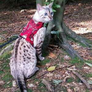Cat Walking Harness Jacket Vest ~ Butterfly Cat Jackets