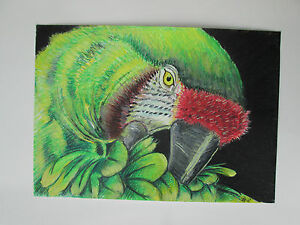 Hand-drawn-animal-pictures-Original-Contemporary-GREEN-PARROT