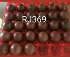 6 French Black Copper Maran Hatching Eggs Very Dark Chocolate Eggs Unique