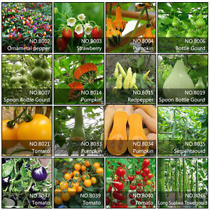 Details About Various Strawberry Seeds Fruit Vegetable Seed Home Garden Indoor Outdoor Plant
