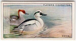 Smew-Duck-Mergellus-albellus-Gamebird-c90-Y-O-Ad-Trade-Card